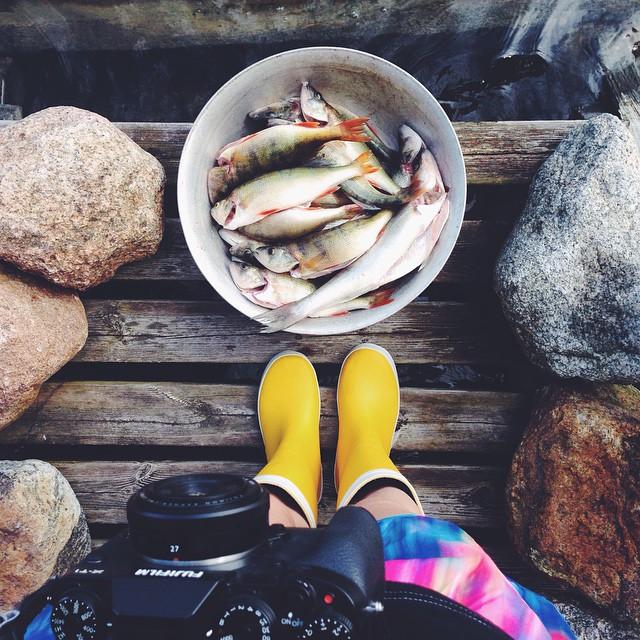 Miehet oli #kalassa Astiassa ei ole vielä kaikki verkoista saadut affenet, koska takana kyttäävä rantakäärme jännitti minua liikaa. Luikerteli kuitenkin pois. Polulla myös kyy.